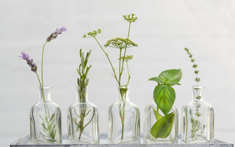 Wellbeing through plants from Dr Barbieri